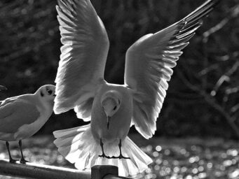 placeimg_640_480_grayscale_animals_cOeNNSh